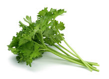 Fresh branch of green parsley Stock Photography
