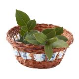 Fresh branch of laurel in the basket Stock Photo