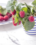Fresh branch of raspberries in blue white stripped mug on table Stock Photography