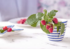 Fresh branch of raspberries in blue white stripped mug on table Royalty Free Stock Image