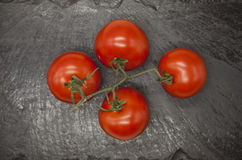 Fresh branch of red Sicilian ripe tomatoes on a stone background Stock Photography