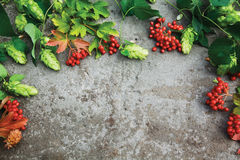 Fresh branches of hop and red berries of viburnum on concrete. Fresh green autumn branches of hop and red berries of viburnum on concrete background. Top view Stock Photos