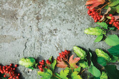 Fresh branches of hop and red berries of viburnum on concrete. Fresh green autumn branches of hop and red berries of viburnum on concrete background. Top view Royalty Free Stock Photography