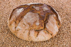 Fresh bread. Against wheat background Royalty Free Stock Images