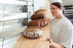 Fresh bread on a board in bakehouse of bakery. Being held by a female baker Royalty Free Stock Images