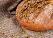 Fresh bread with ears a rye Royalty Free Stock Photos