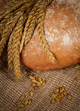 Fresh bread with ears a rye Stock Image