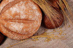 Fresh bread with ears a rye Stock Photos