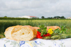 Fresh bread and grain ears outdoor Stock Images
