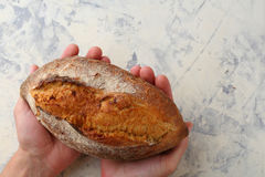 Fresh bread in human hands Stock Photography