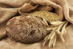 Fresh bread and rye grain Stock Image