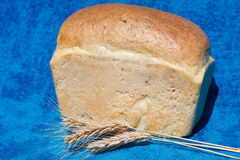 Fresh bread with three ears Royalty Free Stock Photography
