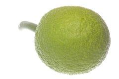 Fresh Breadfruit Isolated Stock Photos