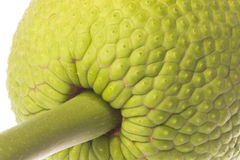 Fresh Breadfruit Macro Isolated Stock Photography
