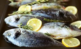 Fresh bream fish with rosemary and spices ready to be cooked on grill.. stock image