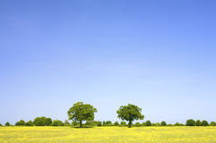 A fresh and bright field of grass with a blue sky Stock Image