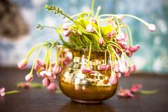 Fresh flowers of chines honeysuckle or madhumalti in a flower vase on brown colored surface. Fresh bright flower of madhumati or honey suckle or Rangoon creeper stock photos