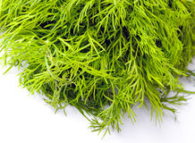 Fresh bright green dill. On a bright background Royalty Free Stock Photography