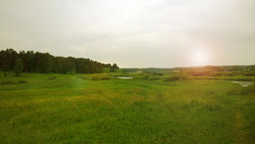 Fresh bright green field after the rain. & x28;Russia& x29 Royalty Free Stock Photos
