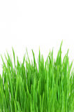 Fresh bright green grass Royalty Free Stock Photography
