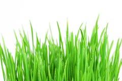 Fresh bright green grass Stock Image