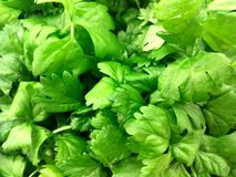 Fresh bright green parsley leaves background royalty free stock photography