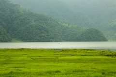 A fresh bright green rice fields on the background of the river of the lake with a boat and wooded mountains. Fresh bright green rice fields on the background of royalty free stock images