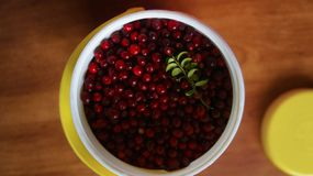 Fresh cowberry in a white high jar Stock Photos