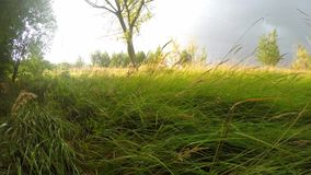 Fresh bright long green grass in the field stock video footage