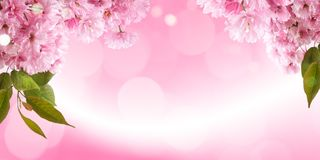 Fresh bright spring background design with cherry blossom flowers and leaves stock images