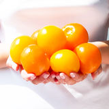 Fresh and bright tomatoes Stock Photography