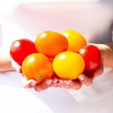 Fresh and bright tomatoes Royalty Free Stock Photos