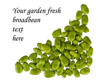 Fresh broad bean border, frame, corner, isolated Royalty Free Stock Images