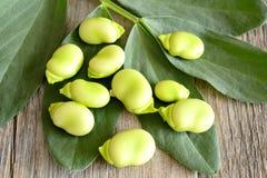 Fresh broad bean Stock Photo