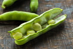 Fresh broad bean pods - closeup with selective focus stock photo