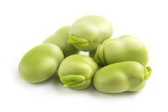 Fresh broad beans Stock Image