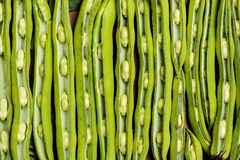 Fresh broad beans in Flat lay. Stock Photography