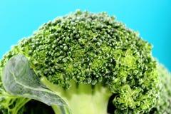 Fresh broccoli Stock Image