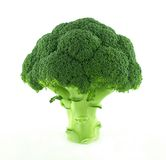 A fresh broccoli Royalty Free Stock Photo
