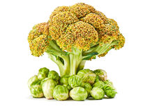 Fresh broccoli and brussels sprouts isolated on a white Royalty Free Stock Image