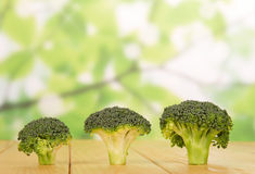Fresh broccoli close-up on  abstract green background. Stock Photography