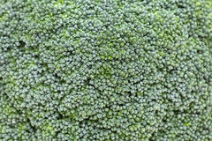Fresh broccoli . Close up of fresh raw broccoli background Stock Photos