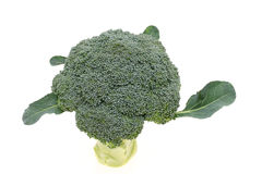 Fresh broccoli. Close up of fresh raw broccoli isolated on white background Royalty Free Stock Photos