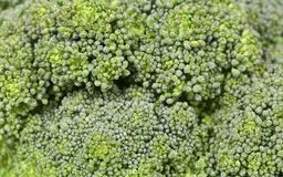 Fresh broccoli in close up. Stock Images