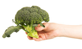 Fresh broccoli in a female hand closeup Royalty Free Stock Image