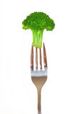 Fresh broccoli on a fork Stock Photography