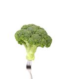 Fresh broccoli on a fork. Royalty Free Stock Image