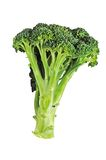 Fresh Broccoli Isolated Stock Photo