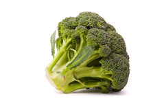 Fresh broccoli isolated on white background Stock Images