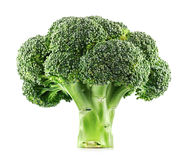 Fresh Broccoli isolated. On a white background Royalty Free Stock Image